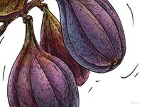 Figs_illustration for Veggo brand (detail)
