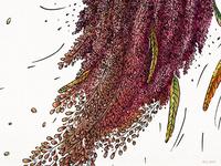 Quinoa (a detail)
