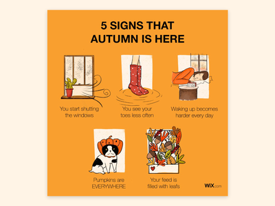 5 Signs that Autumn is Here!