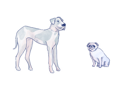 Dogs pt. 2 sketch drawing animals illustration