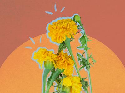 Flower pop series 1 colorful pop plants design vector illustration photography