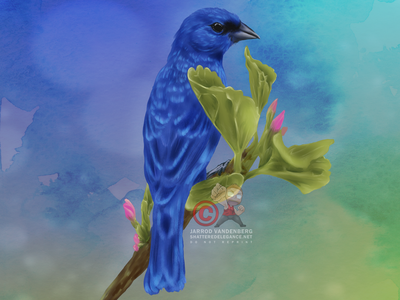 Indigo Bunting clip studio paint illustration