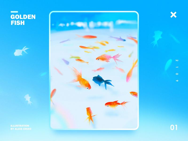 Goldenfish fish blue illustration design
