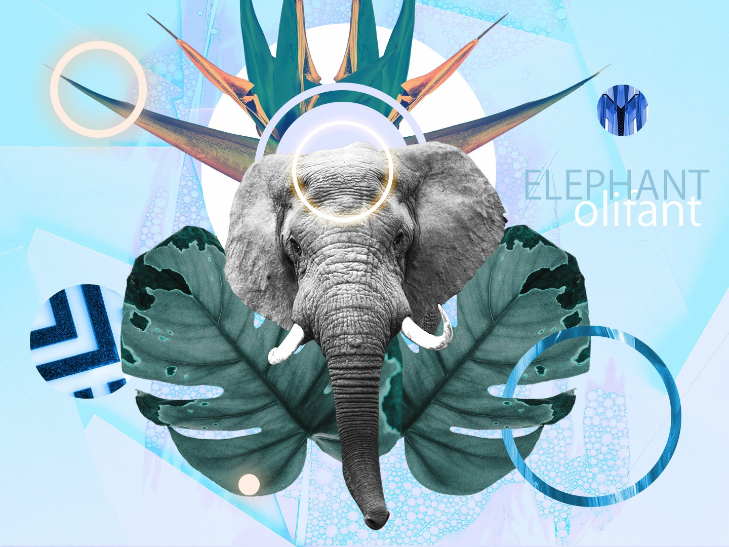 Collage 13 - Relax & Let Go chill art decor elephant african blue concept collage warm up creative illustration design