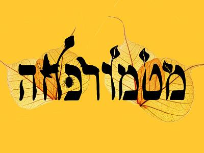 metamorphoza typography