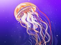 Jellyfish jellyfish digital illustration design digital painting illustration design illustration artist art gallery graphic design digital artist digital illustration graphics artwork ui design