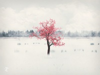 Lonely Blossom Tree