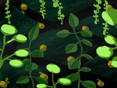 Dark Green pattern fruit plant colour color black green drawing illustration