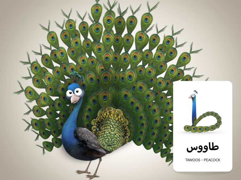 Adventures Of Zee Arabic Flash Cards - Peacock arabic typography arabic flashcards childrens book character design illustration