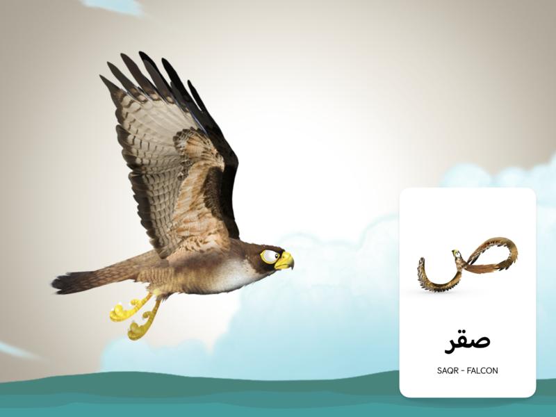 Adventures Of Zee Arabic Flash Cards - Falcon print design arabic typography arabic flashcards children book illustration childrens book character design illustration