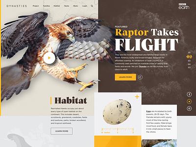 BBC Earth: Hawk ui design concept responsive layout brandmark website identity digital logo
