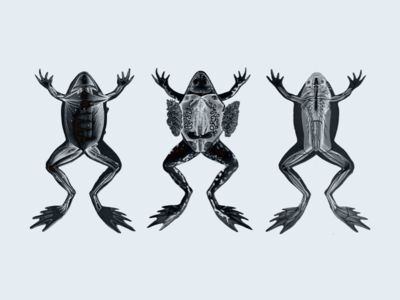 Unadvised Frogs