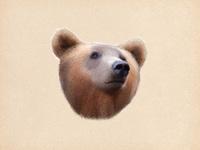 Bear fullview