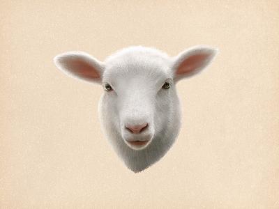 Sheep lamb sandor illustration hair goat drawing painting animal cut lovely sheep pencil
