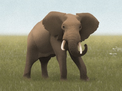 Untitled wild animal animal protection animal grass sandor bone grassland elephant painting illustration drawing