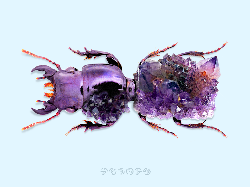 Bugs + Stones retouching fantasy nature photo diamond stones bug