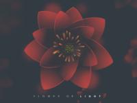Flower of light 3x