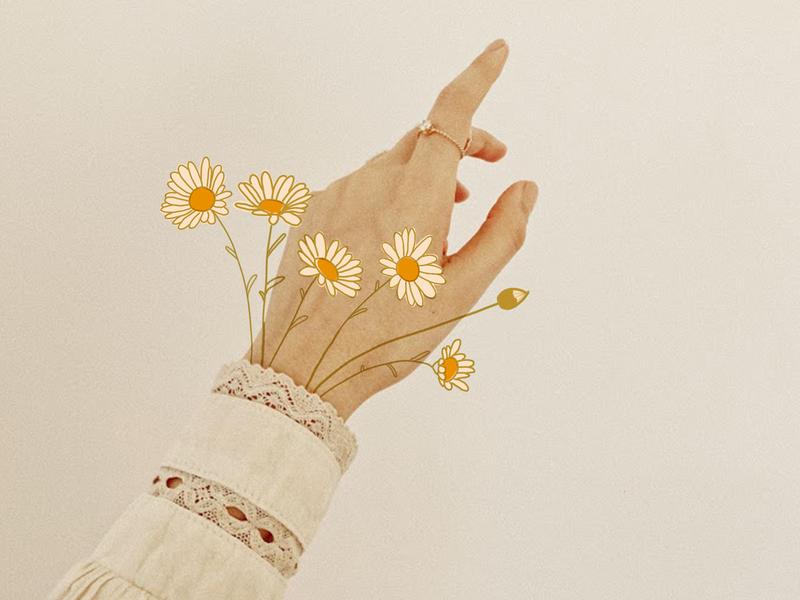 Daisies minimal hand daisy flower boho illustration