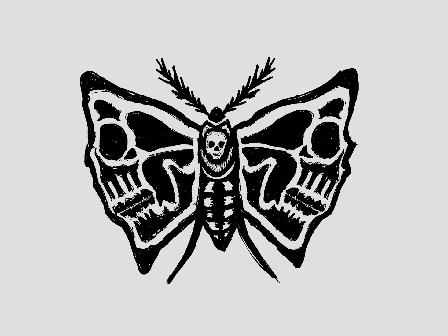Moth Inlay (Sketch) insects hand drawn skull death moth inlay illustration drawing sketch