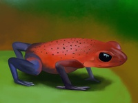 Digital Painting - Rainforest Poison Dart Frog
