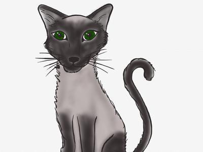 the Siamese animal cat siamese hand drawn illustrator artists art illustration digital art icon factory linea sketch app