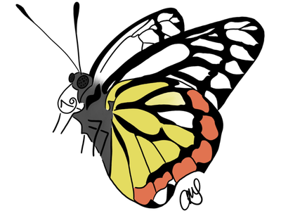 a butterfly illustration ipad pro digital art pollenator insect butterfly procreate artmash