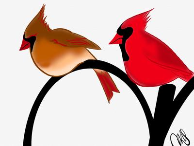 some cardinals cardinals birds animals inktober digital art linea sketch app ipad pro illustration art