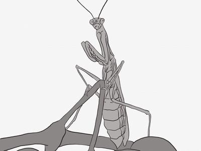 praying mantis illustration artist art ipad pro linea sketch praying mantis bug line art digital illustration digital art