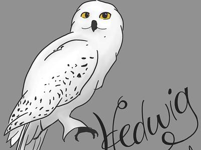 hedwig digital art cartoon animal procreate artist ipad pro art illustration ipad pro snowy owl hedwig wizard harrypotter