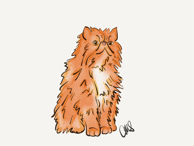 Crookshanks cartoon kneazle cat animal hand drawn ipad pro art linea sketch wizards harrypotter illustration ipad pro digital art