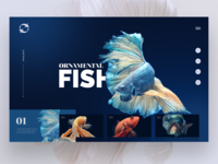 Daily Interface 13 - 30: Ornamental Fish