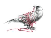 White Raven Illustration
