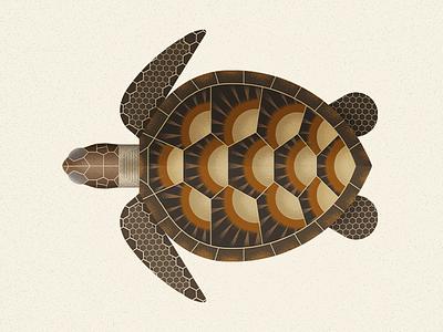 Green sea Turtle sea turtle wild animal sea animal biodiversity green turtle turtle illustration vector