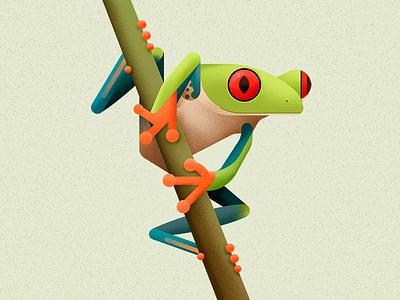 Red Eyed Treefrog amphibian animal biodiversity illustration vector frog
