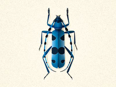 Rosalia Alpina beetle insect naturalhistory illustation vector emtomology coleoptera bug beetle