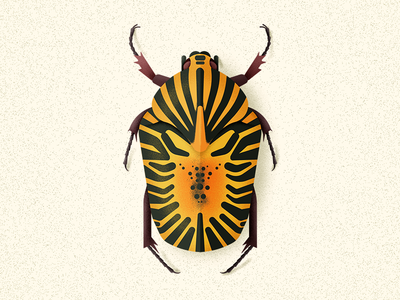 Mexican Flower Chafer
