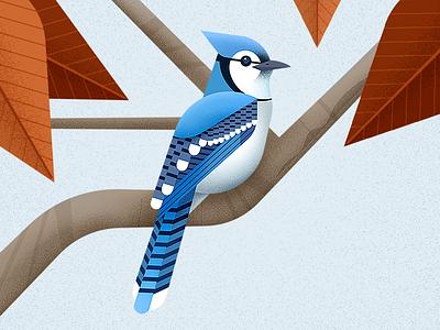 Blue Jay blue jay geometric vector illustration cyanocitta cristata cyan wild animal blue bird bird bluejay