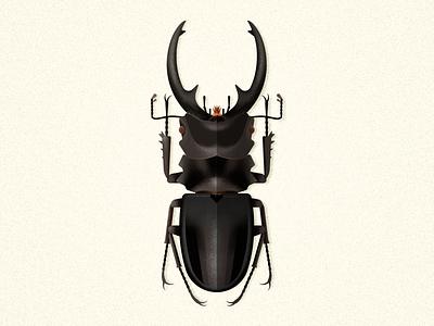 Odontolabis Intermedia wildlife beetle design bug odontolabis insect coleoptera biodiversity illustration vector