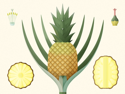 Pineapple piña illustration pineapples botanical art vector botanical illustration botanical tropical ananas fruit pineapple