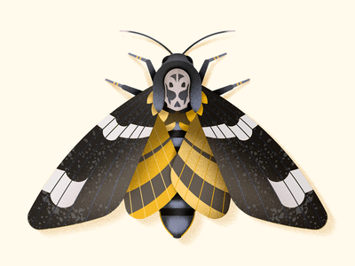 Death's head hawkmoth lepidoptera skull halloween bug insect hawkmoth moth illustration vector