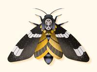 Death's head hawkmoth