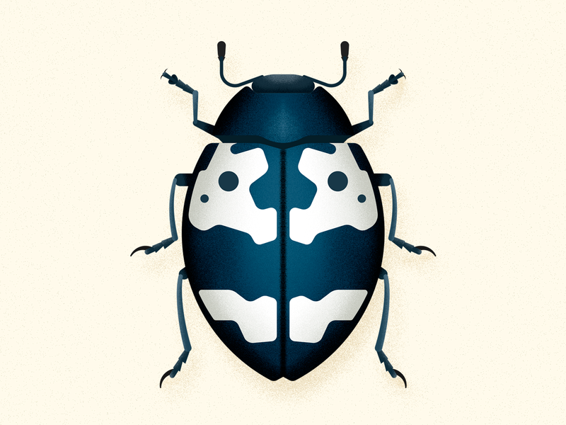 Barytopus beetle by Nature Press on Dribbble