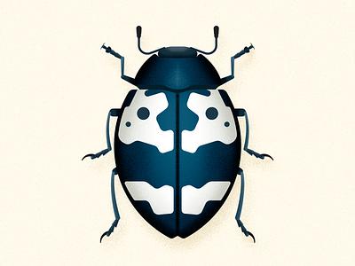 Barytopus beetle illustration wild animal vector biodiversity animal coleoptera beetle insect bug