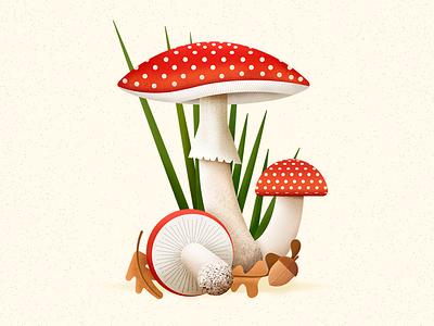 Amanita muscaria fungi fungus botanical art botanical seta amanita mushroom illustration vector