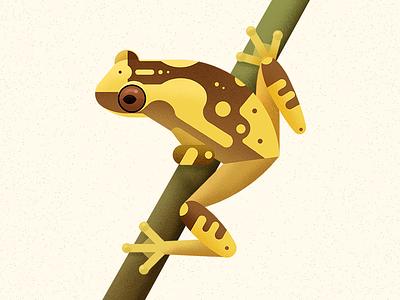Hourglass Treefrog amphibian frog wild animal biodiversity animal illustration vector