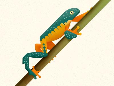 Fringed tree frog fauna animal treefrog amphibian vector illustration frog biodiversity