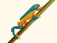 Fringed tree frog