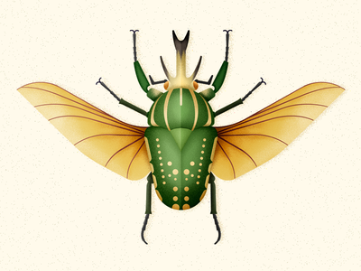 Giant African Fruit Beetle vector bug coleoptera insect beetle biodiversity illustration