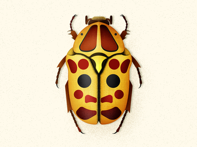 Flower Beetle bug vector biodiversity coleoptera illustration beetle insect
