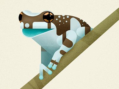 Amazonian Milk Frog wild animal amazonia amphibian animal vector illustration treefrog frog biodiversity